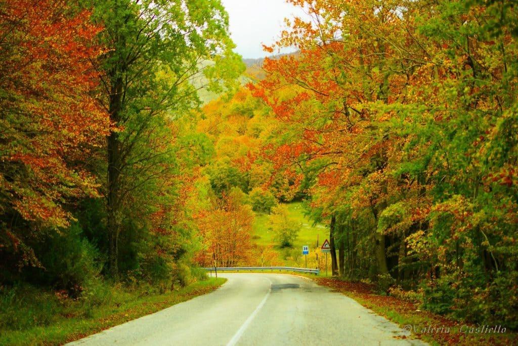 Foliage_Abruzzo_Pescasseroli