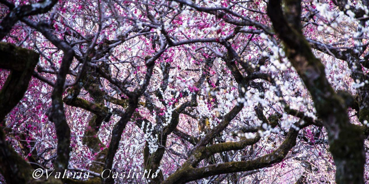 Giappone tra febbraio e marzo: il periodo migliore per andare!