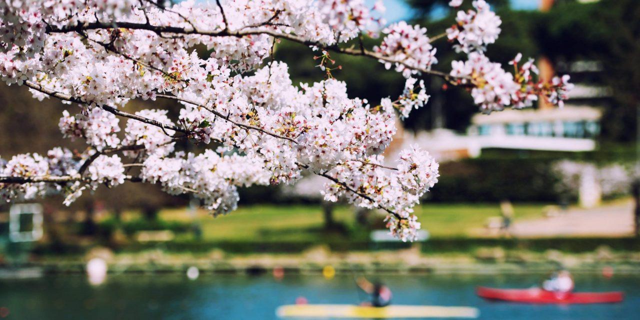 Cultura giapponese a Roma: il Giappone autentico nella città eterna