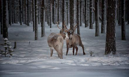 Lapponia Svedese in inverno: guida al Grande Nord