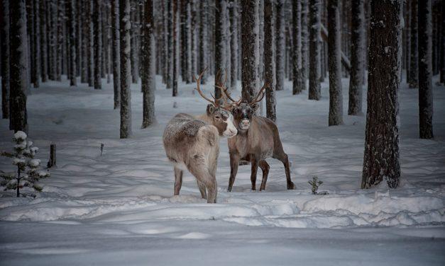 Lapponia Svedese in inverno: cosa vedere e fare