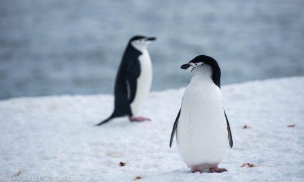 Prepararsi all'Antartide: abbigliamento, attrezzatura, libri e film