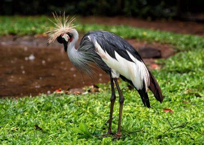 Foz do Iguaçu (BR)-Parque das Aves