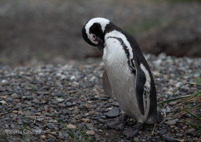 Curiosità sulla Terra del Fuoco e sulla Patagonia Argentina