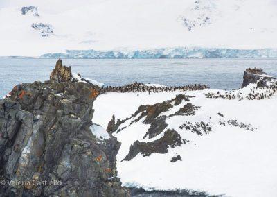 Shetland Meridionali -Half Moon