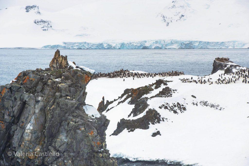 isole_shetland_meridionali_half_moon