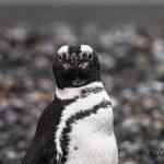 Dieci curiosità sulla Terra del Fuoco e sulla Patagonia Argentina: da Ushuaia in su