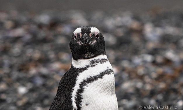 Dieci curiosità su Terra del Fuoco e Patagonia Argentina: da Ushuaia in su