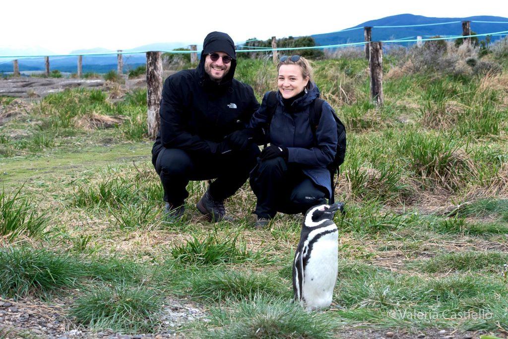 Pinguinera_Isla Martillo_Terra del Fuoco