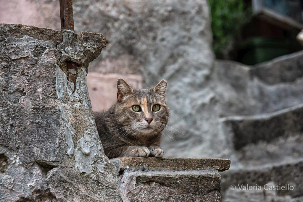 Fauna_Valle del Treja