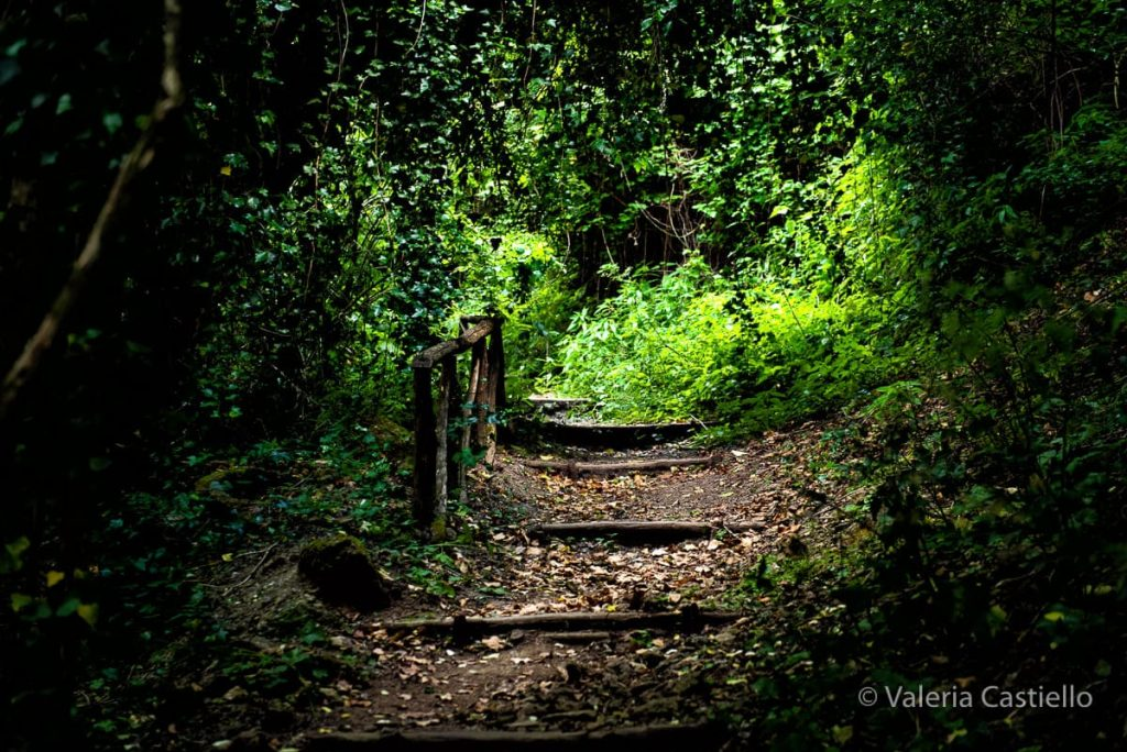 Parco del Treja_Monte Gelato