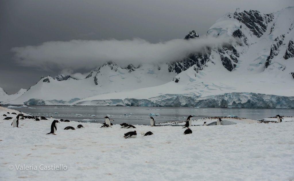 Cuverville - Viaggio in Antartide