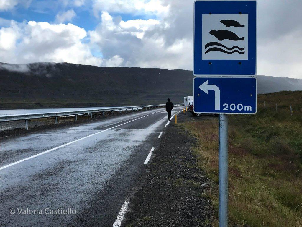 Animali in Islanda_Seal Watching