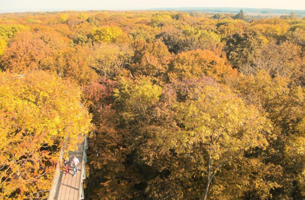 Da vedere in Turingia: Parco Nazionale di Hainich in autunno
