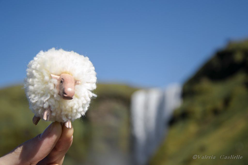 Pecore islandesi - Animali in Islanda